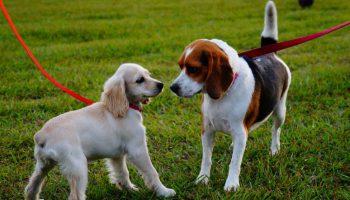 Juegos con tu mascota canina