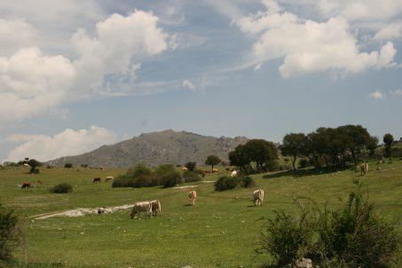 Cerro_de_San_Pedro_